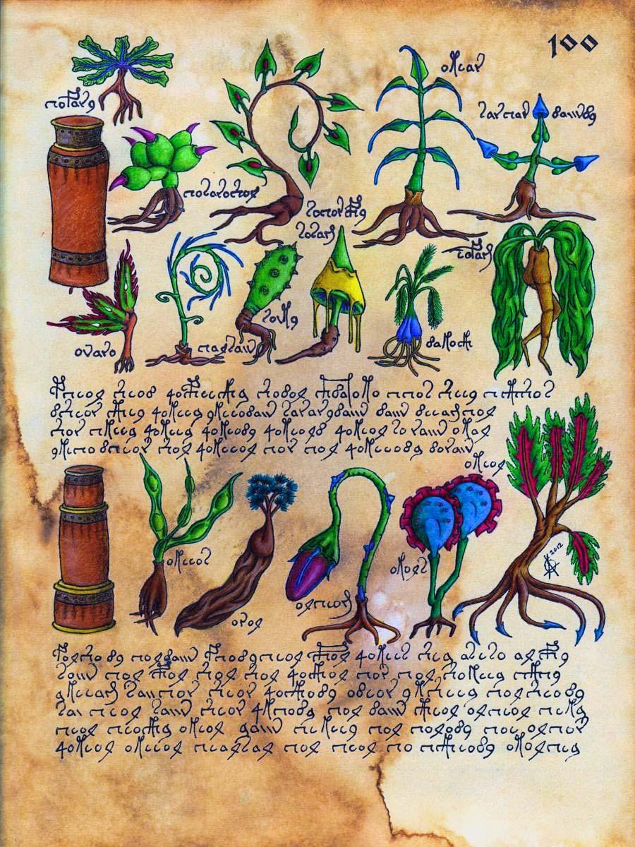 manoscritto Voynich10-800x400