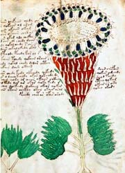 manoscritto Voynich4-300x180