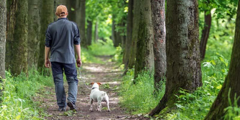 passeggiata-col-cane-2-800x400