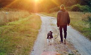 passeggiata-col-cane-3-300x180