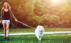 passeggiata-col-cane-4-800x400