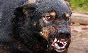 cane-aggressivo-2-300x180