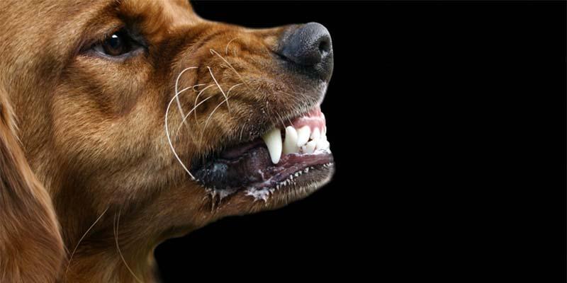 cane-aggressivo-2-800x400