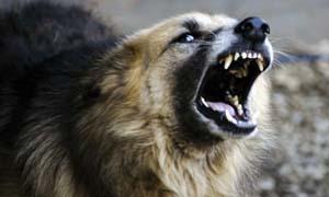 cane-aggressivo-3-300x180