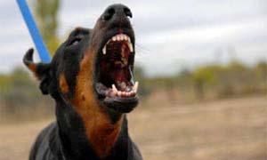 cane-aggressivo-5-300x180