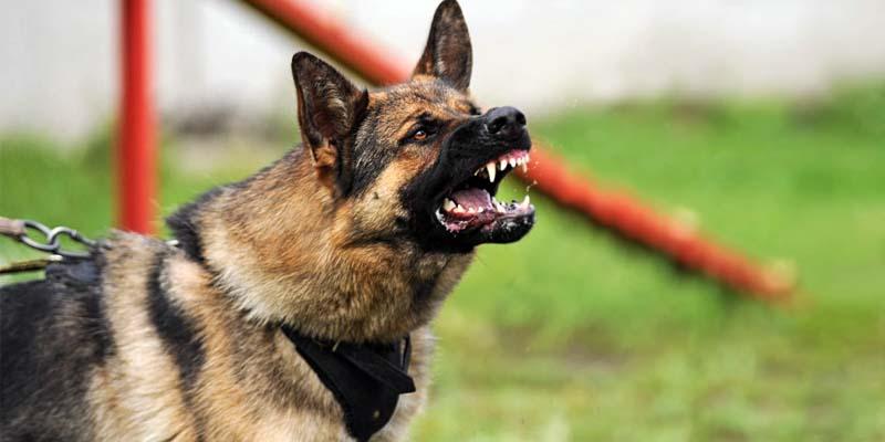 cane-aggressivo-6-800x400