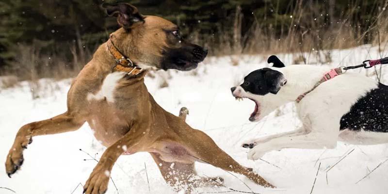 cane-aggressivo-7-800x400
