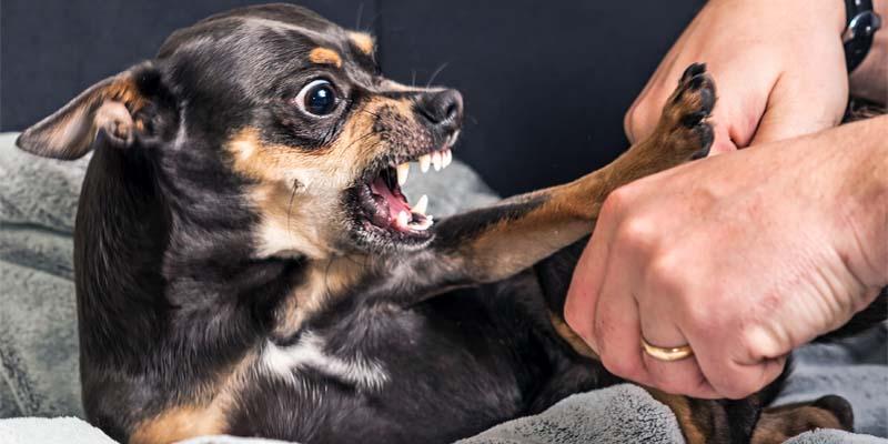 cane-aggressivo-8-800x400