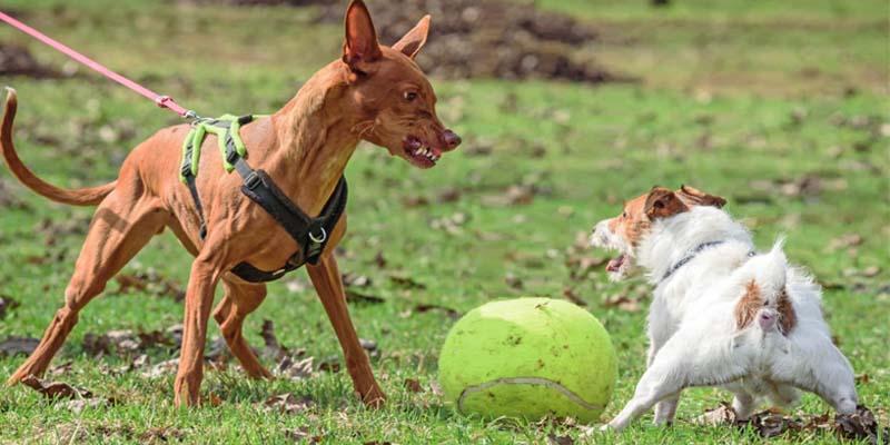 cane-aggressivo-9-800x400