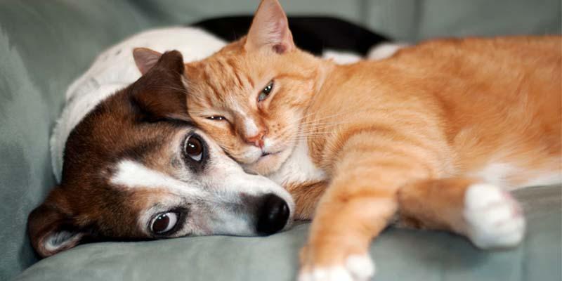 assicurazione cane gatto-11-800x400