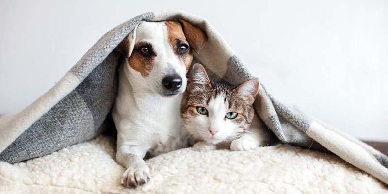 assicurazione cane gatto-12-800x400