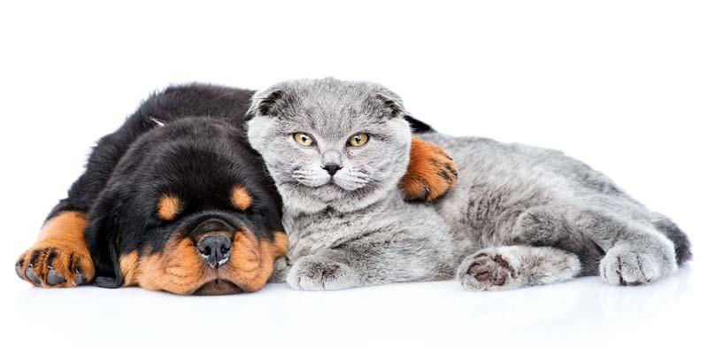 assicurazione cane gatto-13-800x400