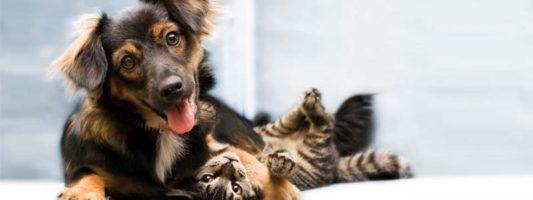 assicurazione cane gatto-2-800x400
