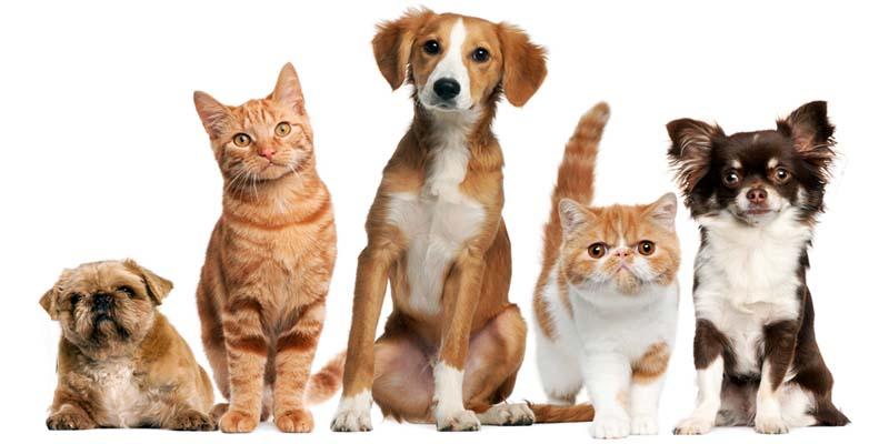 assicurazione cane gatto-3-800x400