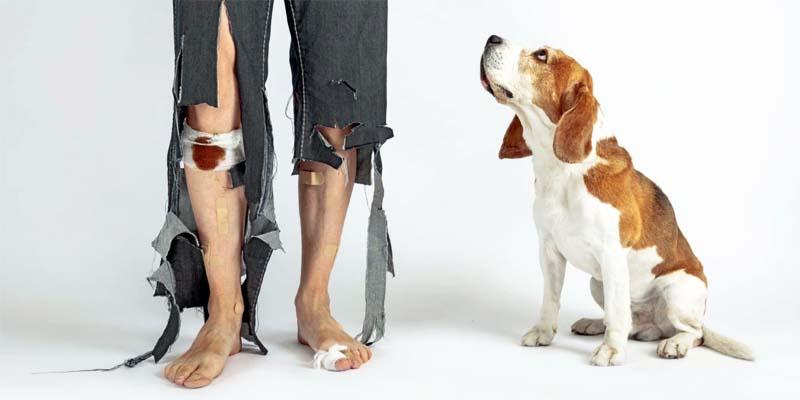 assicurazione cane gatto-4-800x400