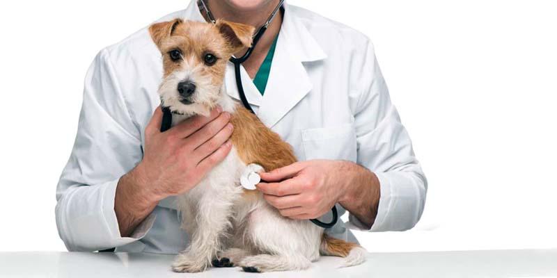 assicurazione cane gatto-5-800x400