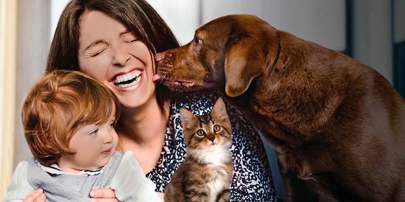assicurazione cane gatto-9-800x400