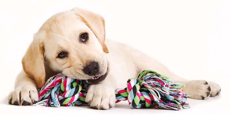 cane che morde-10-800x400