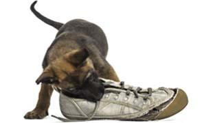 cane che morde-2-300x180