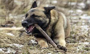 cane che morde-3-300x180