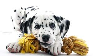 cane che morde-5-300x180