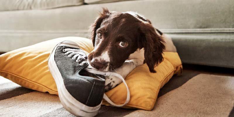 Capire il nostro cane: il suo bisogno di mordere, tra piacere e necessità