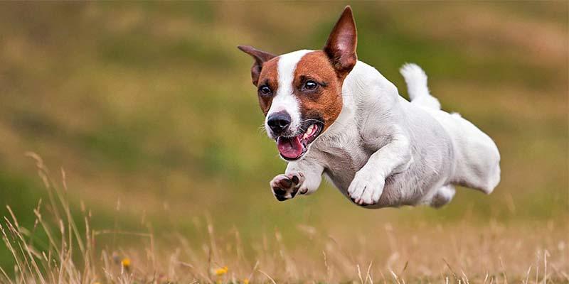 cane da caccia2-800x400