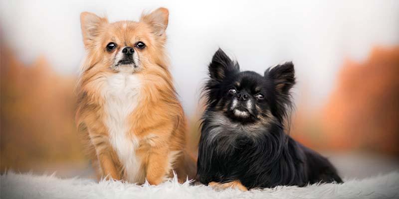 cane da compagnia1-800x400