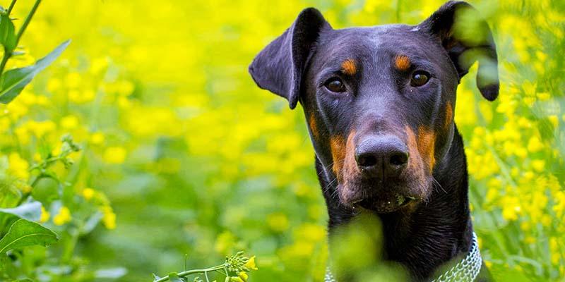 cane da difesa1-800x400