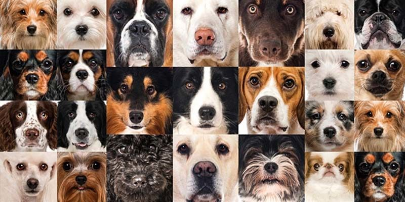 cane giusto1-800x400