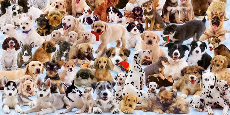 cane giusto2-800x400