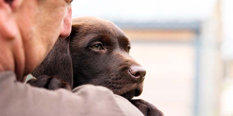 cane giusto5-800x400