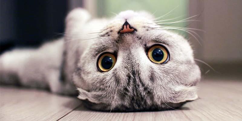 gatto-geloso-10-800x400