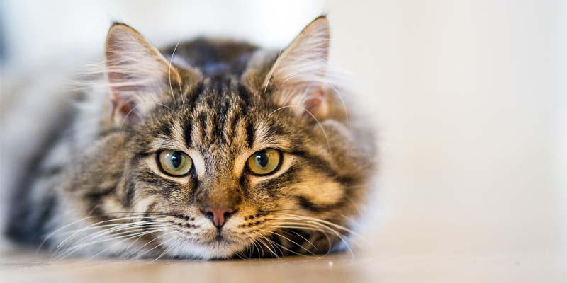 gatto-geloso-4-800x400