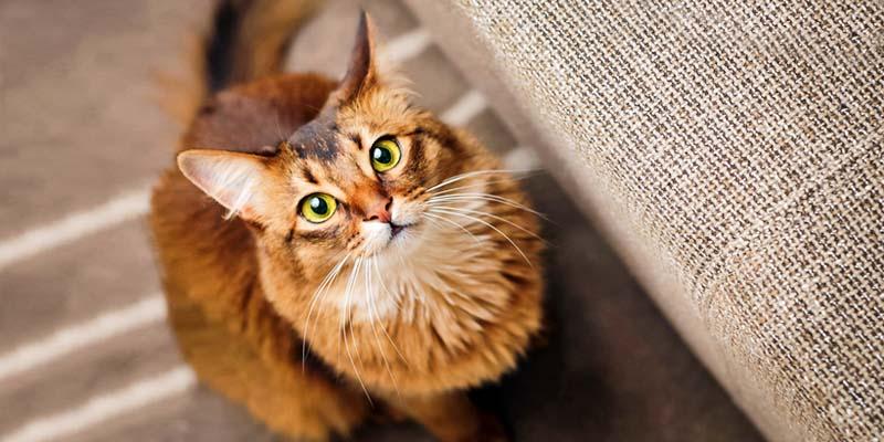 gatto-geloso-9-800x400