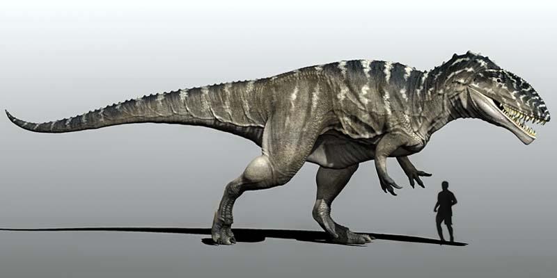 CARCHARODONTOSAURUS-800x400