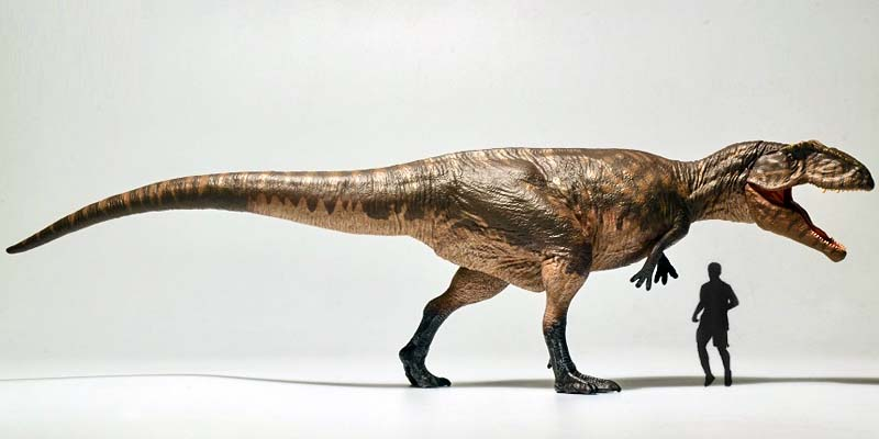 GIGANOTOSAURO-800x400