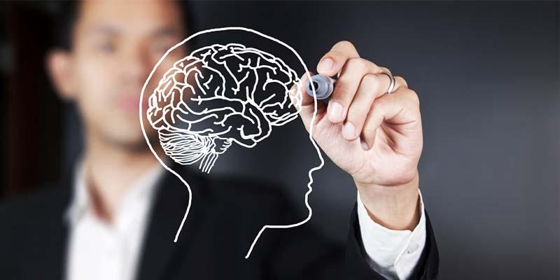 cervello-6-800x400