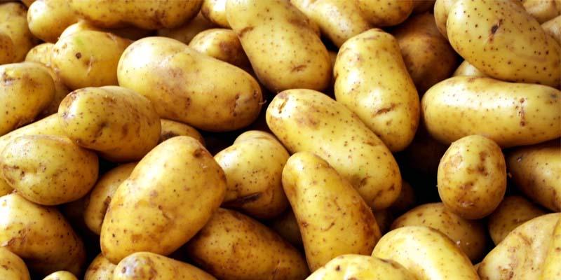 patata-800x400