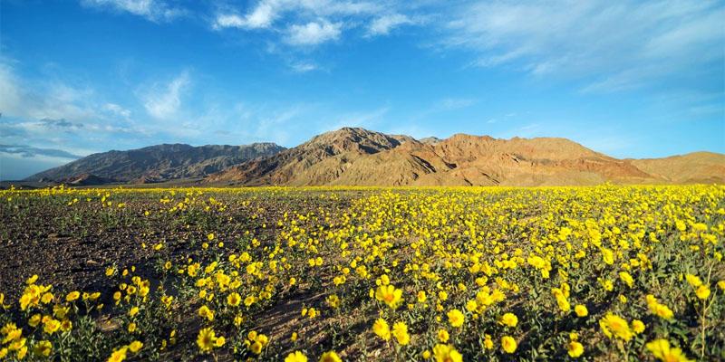 Death Valley-800x400
