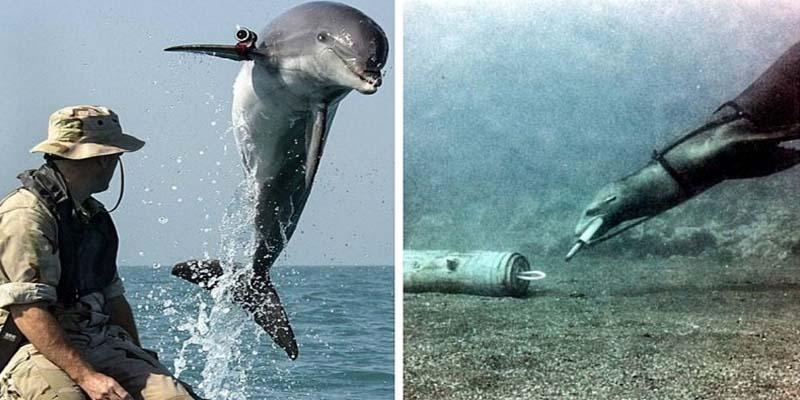 delfini-8-800x400