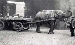 elefanti-300x180