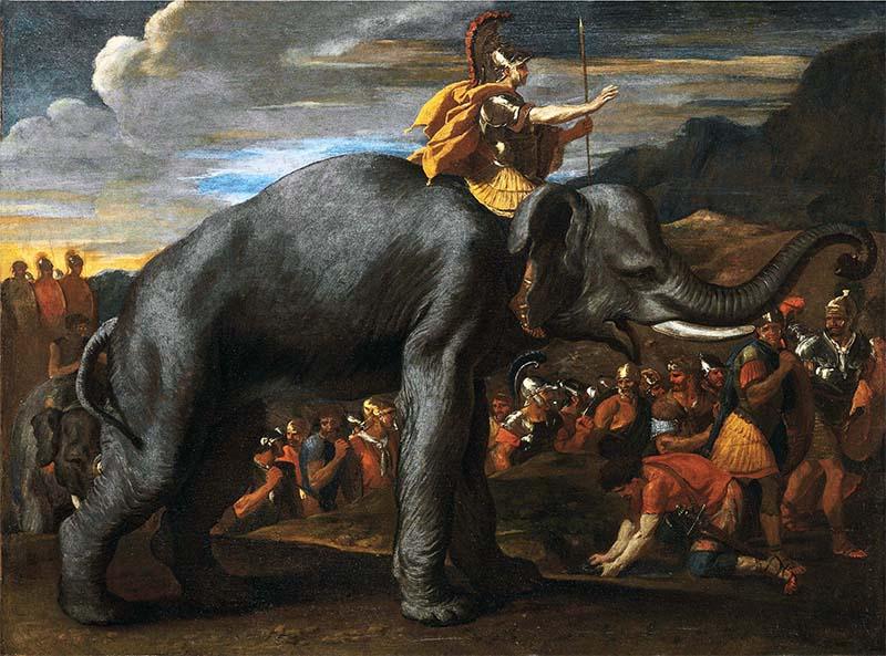 elefanti-6-800x400