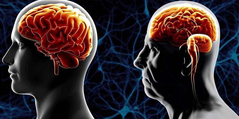 Mantenere giovane il cervello-3-800x400