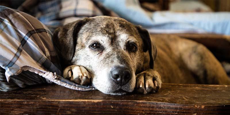 cane anziano-1-800x400