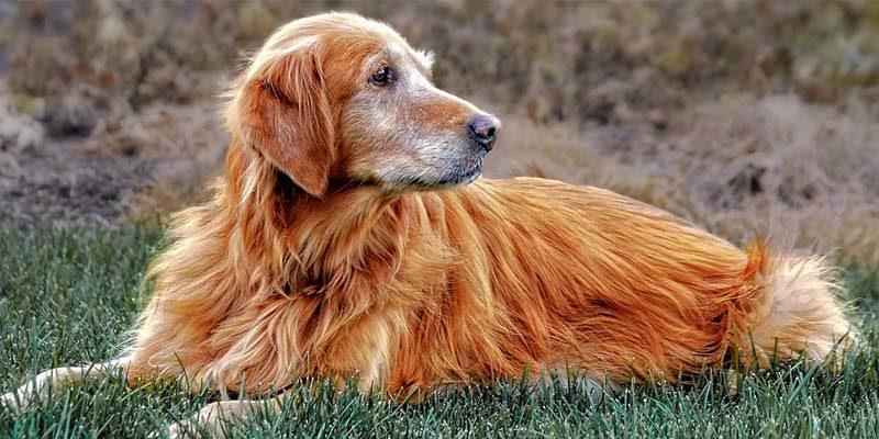 cane anziano-2-800x400