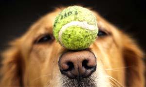 cane anziano-3-300x180