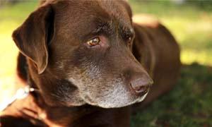 cane anziano-4-300x180