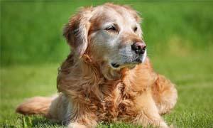 cane anziano-5-300x180