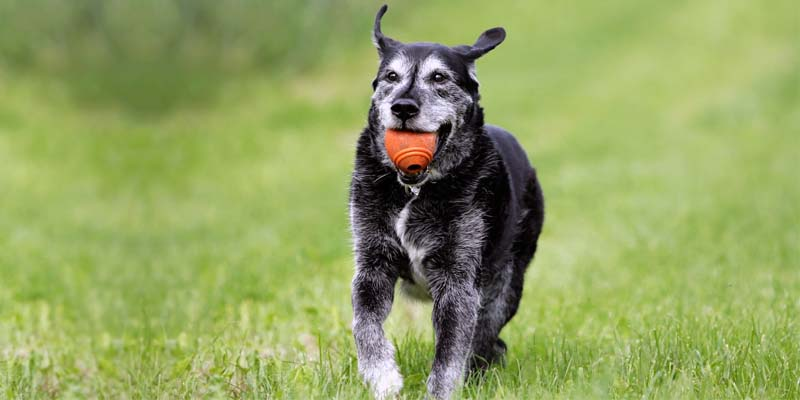 cane anziano-7-800x400